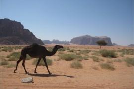 Jordanie Wadi Rum 3