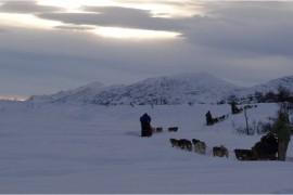 Norvège, novembre 2012. Traîneaux à chiens près de Tromso.