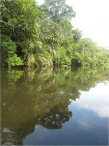 Reflet dans l'eau Costa Rica Tortuguero 2