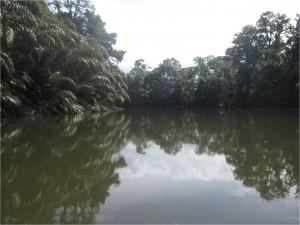 Reflet dans l'eau Costa Rica Tortuguero