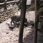 Village akha Pongsaly laos 2