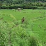 Village akha Pongsaly laos 3