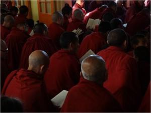 McLeod Ganj moines de dos