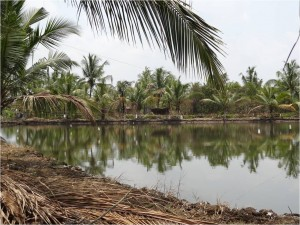Inde Backwaters paysage canoë