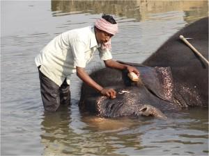 Inde Hampi éléphant