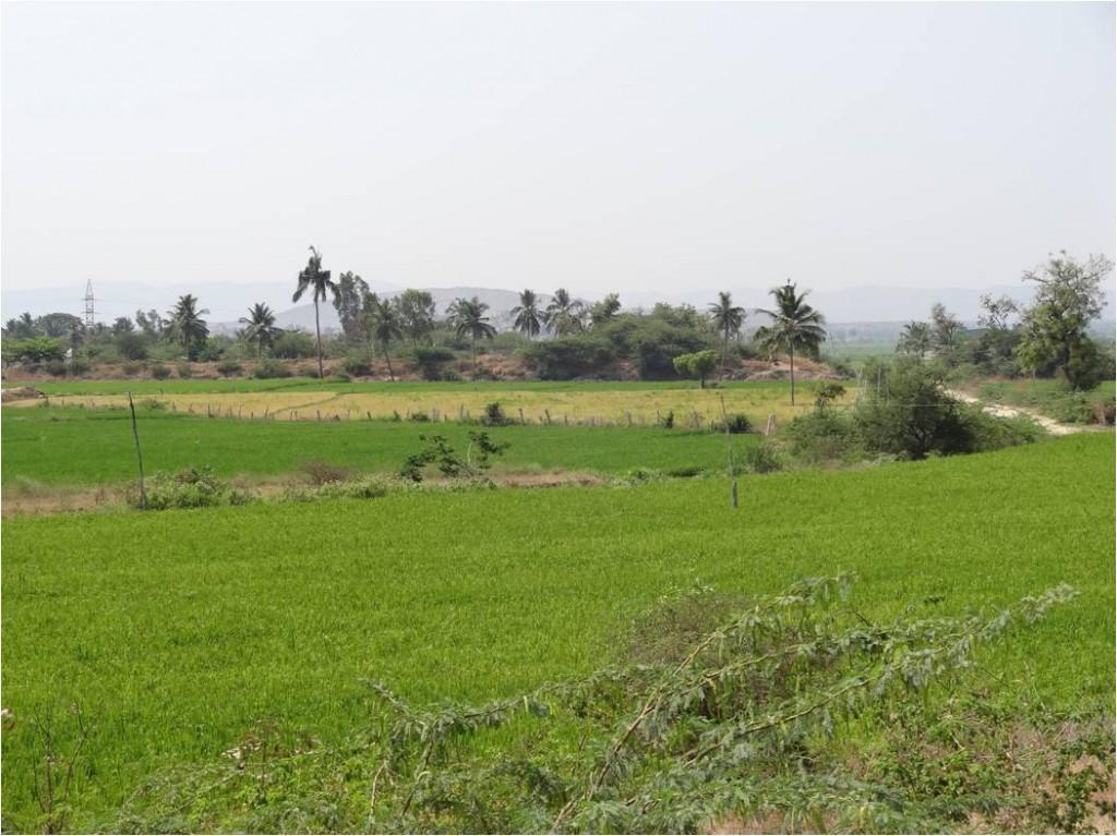Inde Hampi rizières