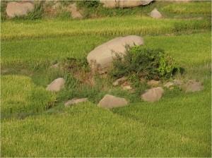 Inde Hampi rizières2