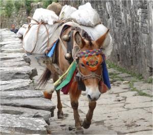 Népal Poon Hill âne jour 2