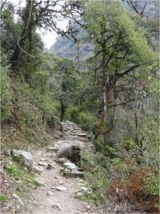 Népal Poon Hill forêt jour 1 1