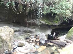 Népal Poon Hill forêt jour 1 2