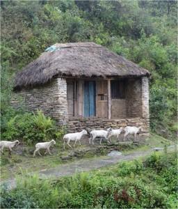 Népal Poon Hill jour 3 3