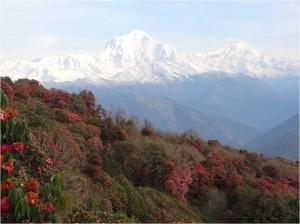Népal Poon Hill montagnes 5