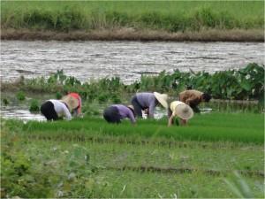 Chine Wuyuan Yancun travailleurs
