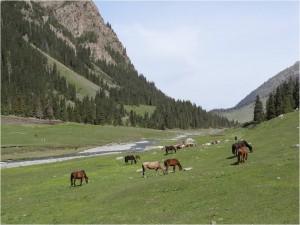 Kirghizistan Altyn Arashan chevaux 2