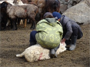 Kirghizistan Kol Ukok Altimbek
