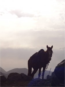 Kirghizistan Kol Ukok cheval coucher soleil