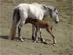 Kirghizistan Kol Ukok chevaux