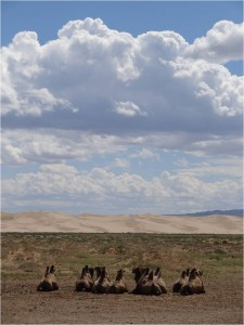 Mongolie désert Gobi 1