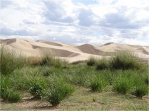 Mongolie désert Gobi Khongoryn Els dunes 4