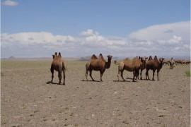 Mongolie désert Gobi image à la une