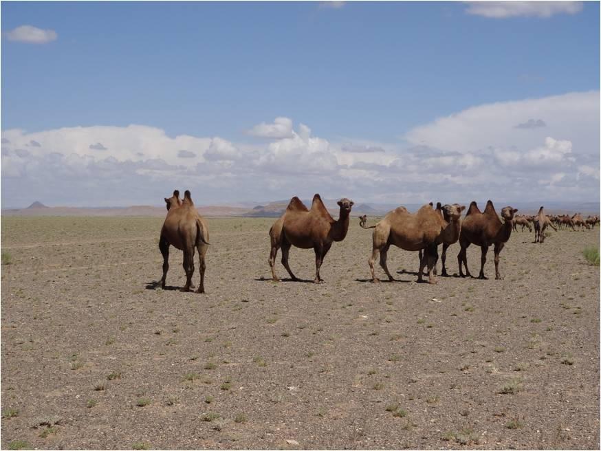 N'y a-t-il vraiment rien dans le désert de Gobi?