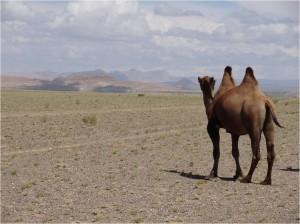 Mongolie désert Gobi montagnes colorées 1