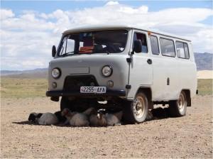 Mongolie désert Gobi van
