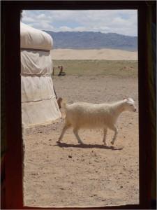 Mongolie désert Gobi yourte 5