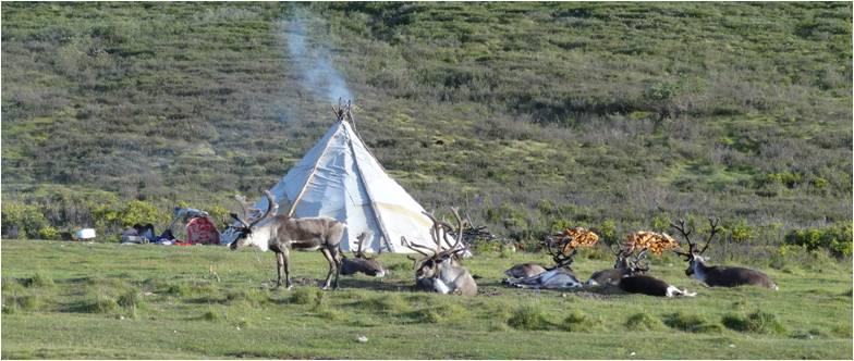 Mongolie trek cheval Tsaatanes tipis 3