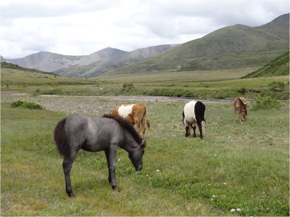 Mongolie trek cheval jour 2 1