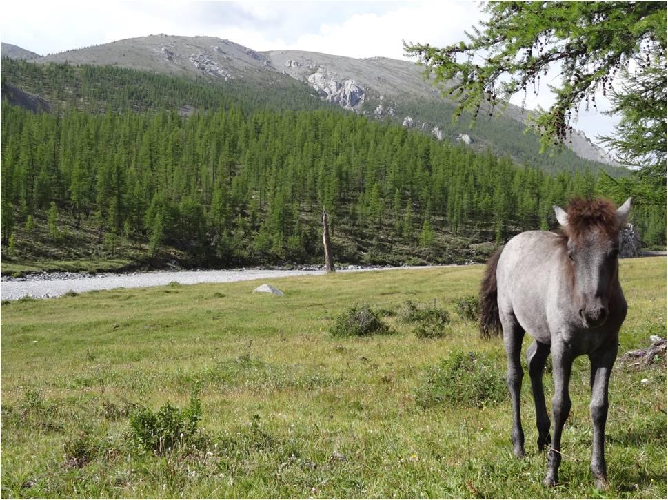 Mongolie trek cheval jour 2 2