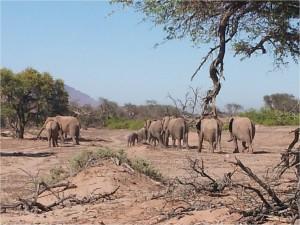 Namibie-Damaraland-éléphants1