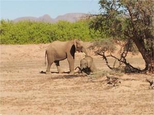 Namibie-Damaraland-éléphants2