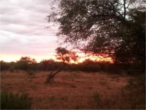 Namibie-Okonjima-couchersoleil